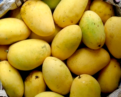 importance of mango tree An analysis of the world market for mangos and its importance for developing countries1 jedele,  it examines and analyses the world mango market.